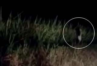 extrana criatura humanoide 320x220 - Vídeomuestra una extraña criatura humanoide corriendo junto a una carretera
