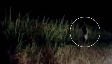 extrana criatura humanoide 384x220 - Vídeomuestra una extraña criatura humanoide corriendo junto a una carretera