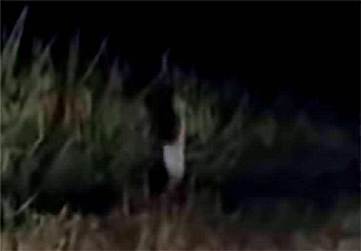 extrana criatura humanoide carretera - Vídeomuestra una extraña criatura humanoide corriendo junto a una carretera