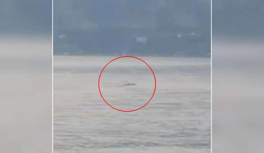 ogopogo 850x491 - Ogopogo existe: Graban a la misteriosa criatura del lago Okanagan en Canadá