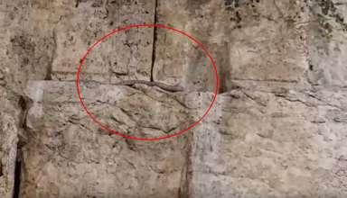senal apocaliptica serpiente 384x220 - Se cumple una señal apocalíptica: una serpiente aparece de la nada en el Muro de las Lamentaciones