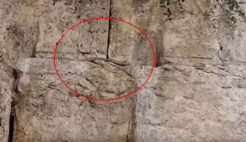senal apocaliptica serpiente 850x491 - Se cumple una señal apocalíptica: una serpiente aparece de la nada en el Muro de las Lamentaciones