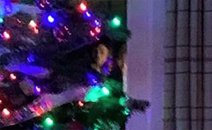 cara fantasmal arbol de navidad - Una mujer fotografía una cara fantasmal en un árbol de Navidad