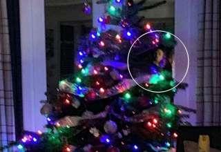 cara fantasmal arbol navidad 320x220 - Una mujer fotografía una cara fantasmal en un árbol de Navidad