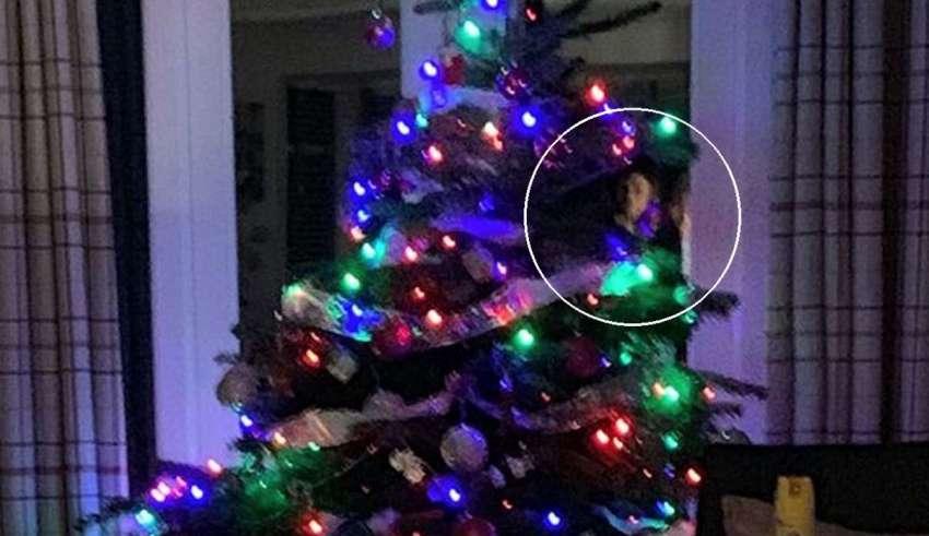 cara fantasmal arbol navidad 850x491 - Una mujer fotografía una cara fantasmal en un árbol de Navidad