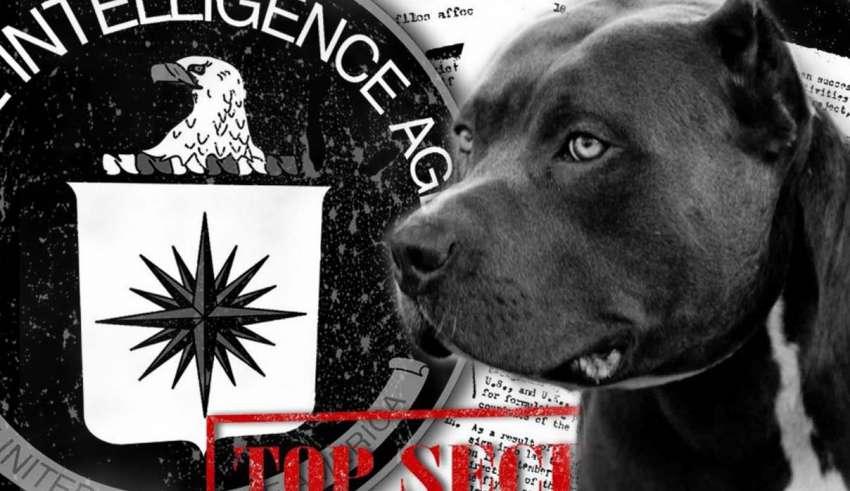 control mental perros 850x491 - Nuevos documentos desclasificados revelan que la CIA experimentó el control mental en perros