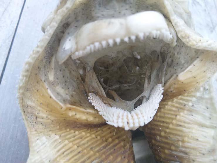 criatura marina playa nueva zelanda - Hallan el espeluznante esqueleto de una extraña criatura marina en una playa de Nueva Zelanda