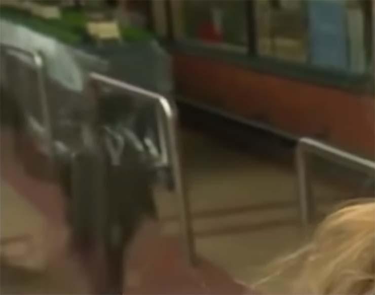 nino teletransporta bbc - Un niño se teletransporta durante una entrevista de la BBC