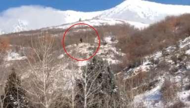 bigfoot montana utah 384x220 - Graban un verdadero Bigfoot en una montaña de Utah