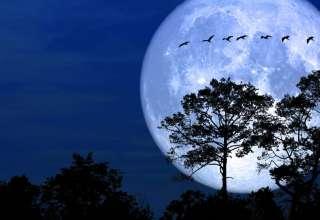 luna de nieve 320x220 - Luna de nieve: significado espiritual y efectos catastróficos en la Tierra