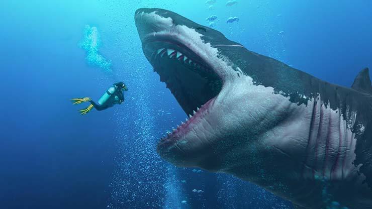 enorme tiburon australia - Hallan un enorme tiburón con la cabeza mordida por una bestia aún más grande en la costa de Australia