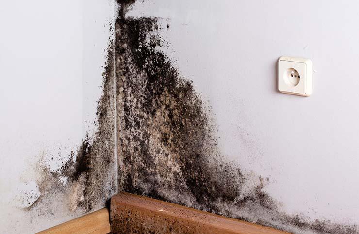 moho en las paredes - Moho en las paredes, entradas para entidadesdemoníacas