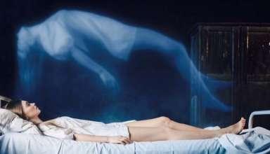 cuando mueres consciente muerto 384x220 - Científico asegura que cuando mueres eres consciente de que estás muerto