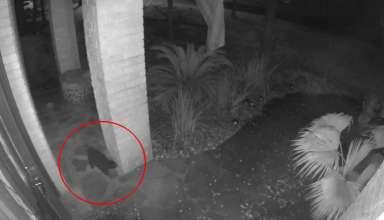 gato fantasma puerta casa 384x220 - Cámara de seguridad graba el momento en que un gato fantasma desparece delante de la puerta de una casa