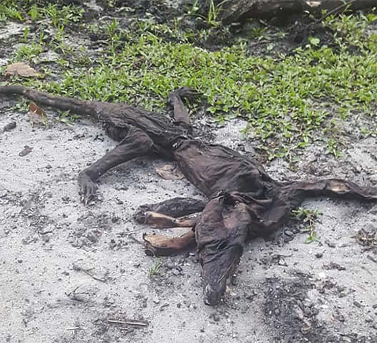 mujer florida criatura mutante - Unamujer de Florida encuentra el cadáver de una criatura mutante en su propiedad