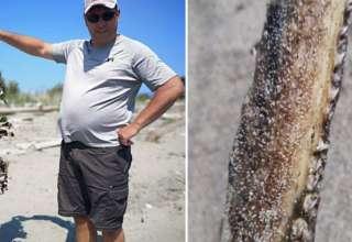 criatura marina prehistorica 320x220 - Hallan los restos de una criatura marina prehistórica con cabeza de cocodrilo en una playa de Canadá