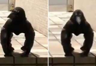 criatura mitad cuervo mitad gorila 320x220 - Graban en Japón una extraña criatura mitad cuervo mitad gorila