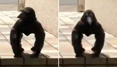 criatura mitad cuervo mitad gorila 384x220 - Graban en Japón una extraña criatura mitad cuervo mitad gorila