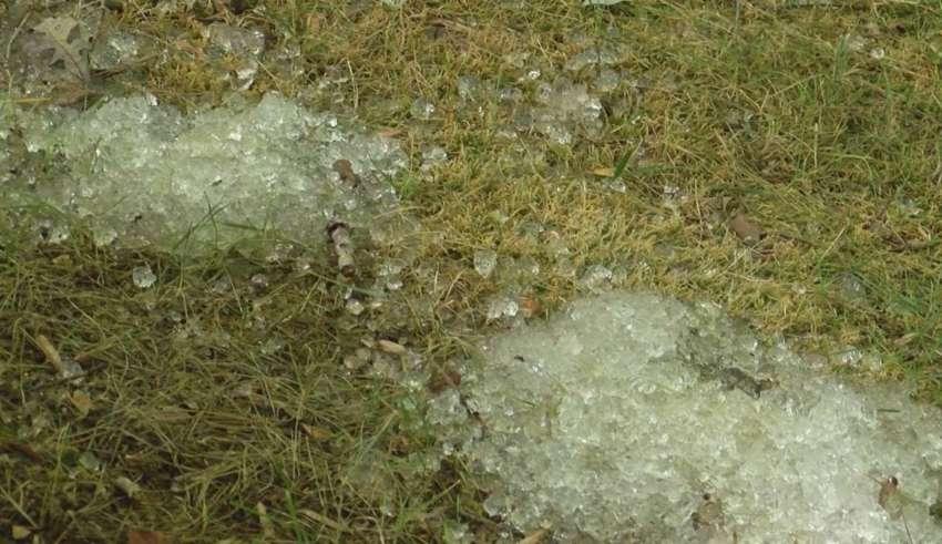 misteriosa sustancia gelatinosa 850x491 - Una pareja estadounidense descubre una misteriosa sustancia gelatinosa en el jardín de su casa