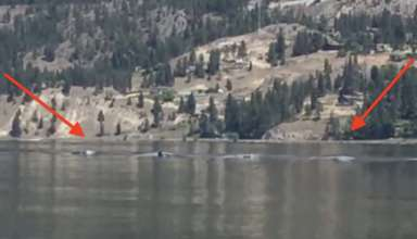 monstruo ogopogo canada 384x220 - Graban al legendario monstruo Ogopogoen un lago de Canadá