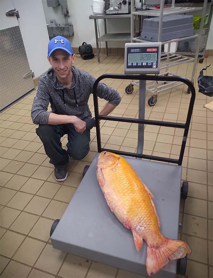 pez mutante lago de estados unidos - Capturan un pez mutante en un lago de Estados Unidos