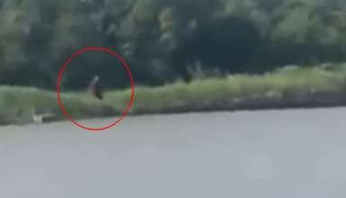 criatura mitad humana mitad perro 384x220 - Pescadores graban una criatura 'mitad humana y mitad perro' en un río de Texas
