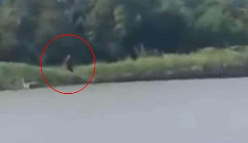 criatura mitad humana mitad perro 850x491 - Pescadores graban una criatura 'mitad humana y mitad perro' en un río de Texas