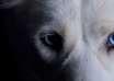 mascota espiritus negativos casa 104x74 - ¿Puede tu mascota alejar a los espíritus negativos de tu casa?