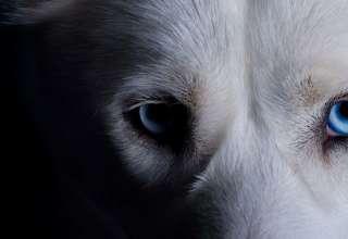 mascota espiritus negativos casa 320x220 - ¿Puede tu mascota alejar a los espíritus negativos de tu casa?