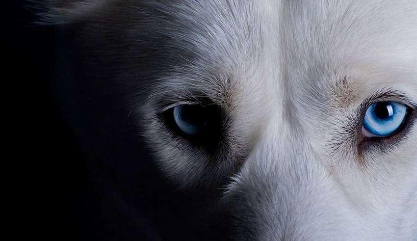 mascota espiritus negativos casa 850x491 - ¿Puede tu mascota alejar a los espíritus negativos de tu casa?