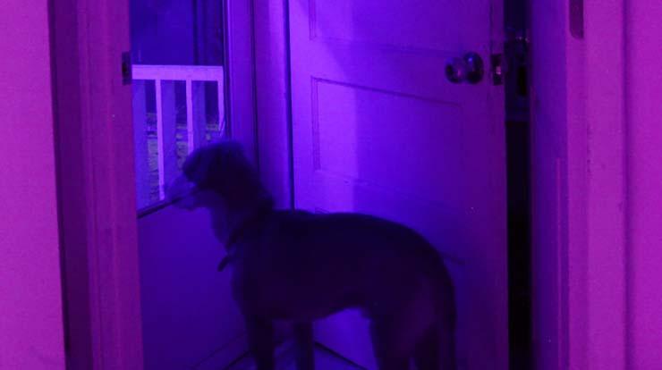 mascota espiritus negativos tu casa - ¿Puede tu mascota alejar a los espíritus negativos de tu casa?