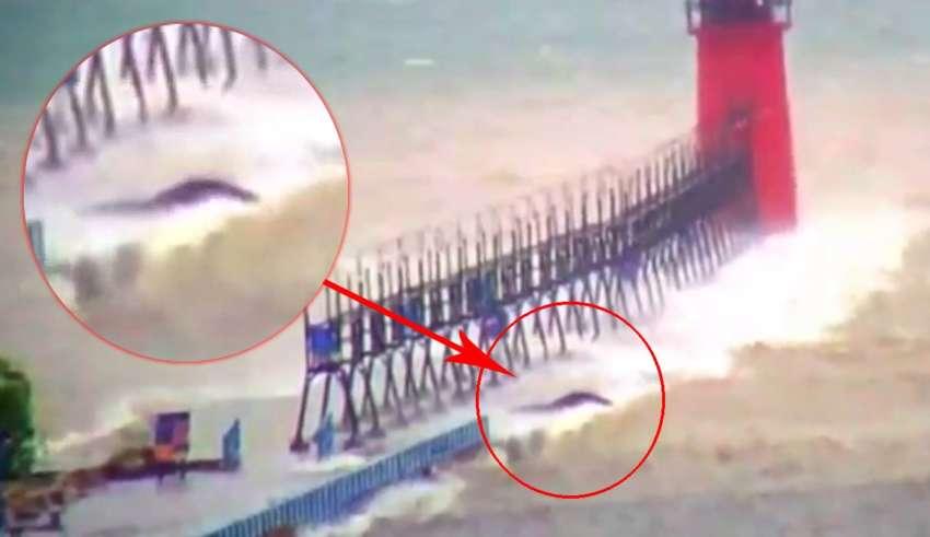 misteriosa criatura lago michigan 850x491 - Aparece una misteriosa criatura en el lago Míchigan durante una tormenta