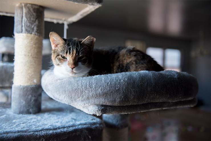 es tu gato psiquico - ¿Tu gato es psíquico?