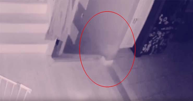 fantasma nino casa - Un hombre graba el fantasma de un niño y su mascota vagando por su casa