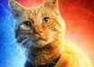 gato psiquico 104x74 - ¿Tu gato es psíquico?