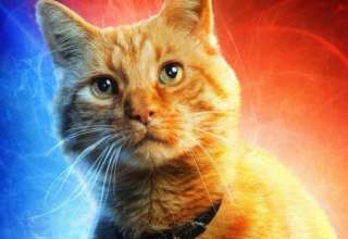 gato psiquico 320x220 - ¿Tu gato es psíquico?
