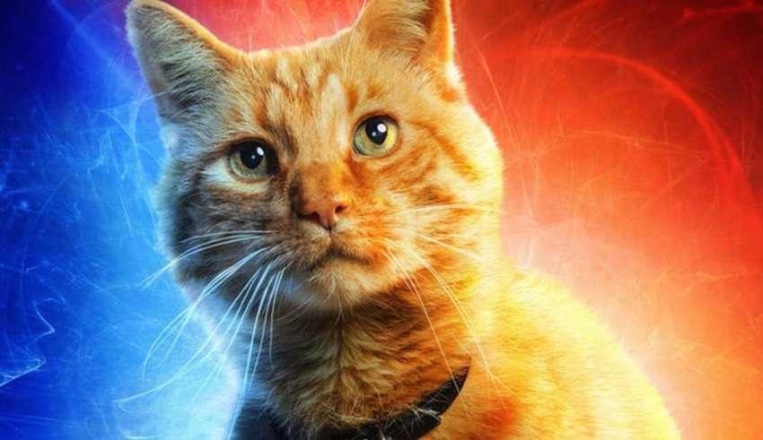 gato psiquico 850x491 - ¿Tu gato es psíquico?
