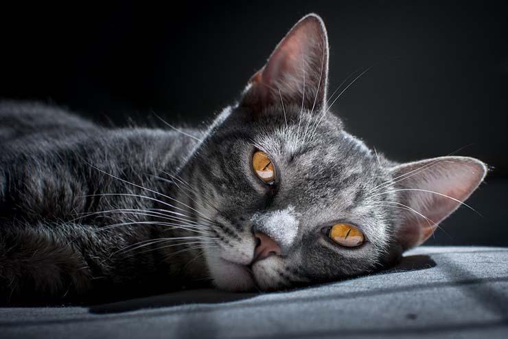 tu gato psiquico - ¿Tu gato es psíquico?