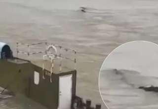 monstruo gigante china 320x220 - Un sorprendente video muestra un monstruo gigante en un río de China