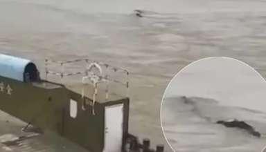 monstruo gigante china 384x220 - Un sorprendente video muestra un monstruo gigante en un río de China