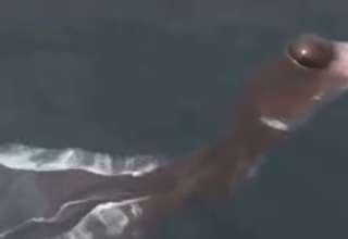 criatura acuatica tailandia 320x220 - Pescadores aterrorizados por la presencia de una extraña criatura acuática en Tailandia