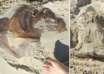 misteriosa criatura australia 104x74 - Descubren los restos de una misteriosa criatura en una playa de Australia