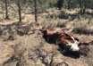 toros mutilados 104x74 - Pánico en Oregón por la misteriosa muerte de toros mutilados y drenados de forma quirúrgica