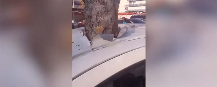 arbol gigante teletransporta - Un árbol gigante se 'teletransporta' a través del techo de un coche en una ciudad francesa