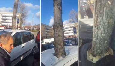 arbol teletransporta 384x220 - Un árbol gigante se 'teletransporta' a través del techo de un coche en una ciudad francesa