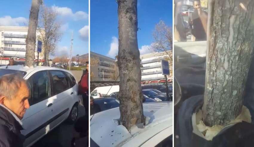 arbol teletransporta 850x491 - Un árbol gigante se 'teletransporta' a través del techo de un coche en una ciudad francesa