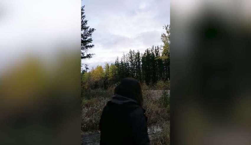 aterradores aullidos bosque 850x491 - Biólogos no pueden explicar los aterradores aullidos en un bosque canadiense