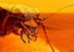 insectos reptiles marte 104x74 - Un reconocido entomólogo demuestra la existencia de insectos y reptiles en Marte