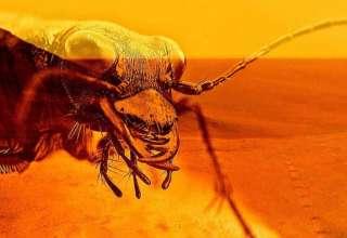 insectos reptiles marte 320x220 - Un reconocido entomólogo demuestra la existencia de insectos y reptiles en Marte