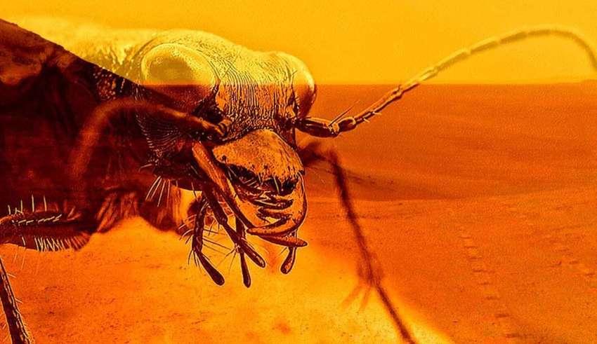 insectos reptiles marte 850x491 - Un reconocido entomólogo demuestra la existencia de insectos y reptiles en Marte